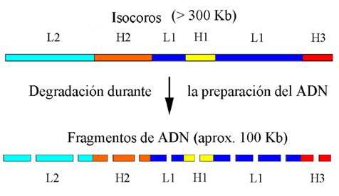 Genoma Humano Aspectos Estructurales