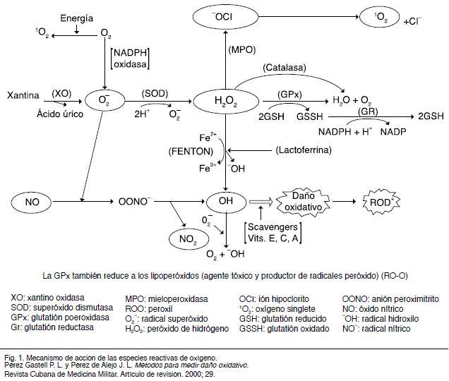 Importancia de la evaluación del estrés oxidativo en el semen humano